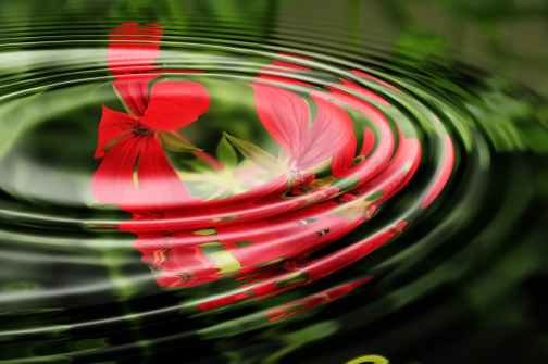 geranium-wave-water-rings-55813.jpeg
